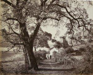 Ancient Hindoo Temple and Pipul Tree - Bheem Tal